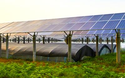What is an Agricultural Solar panel?
